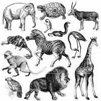 """Typical wild animals of Africa - lion, zebra, monkey, chameleon, snake, elephant, lion, giraffe, antilope, turtle, flamingo etc. Illustrations published in Systematischer Bilder-Atlas zum Conversations-Lexikon, Ikonographische Encyklopaedie der Wissenschaften und Kuenste (Brockhaus, Leipzig, 1875) and in Systematische Bilder-Gallerie, Karlsruhe und Freiburg (1839).CLICK ON THE LINKS BELOW FOR HUNDREDS MORE SIMILAR IMAGES:"""